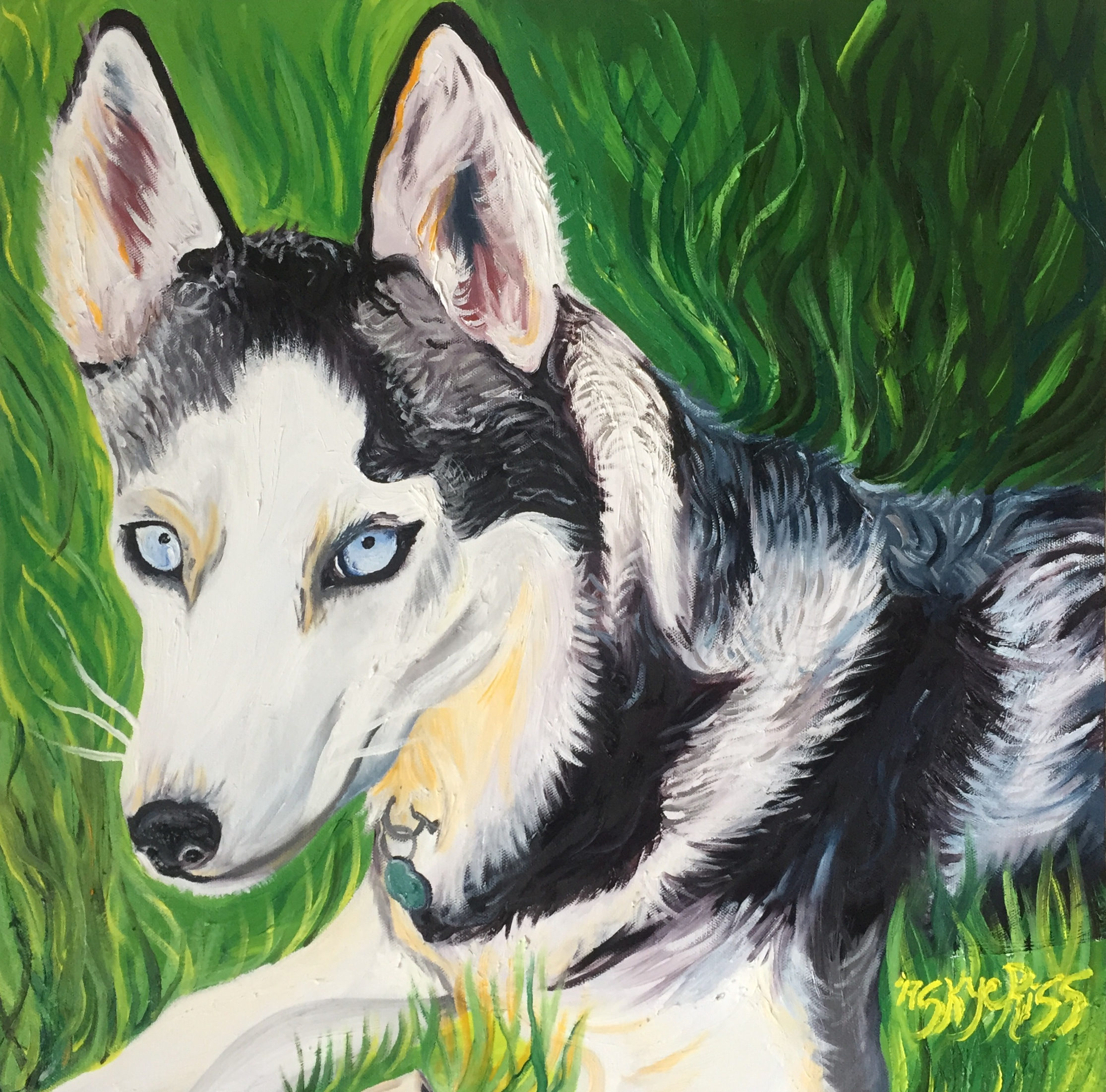 """Pet portrait of a Husky dog named Sasha. (2017) Painting sold and loved. Oil on Canvas 20"""" x 20""""."""